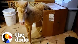 Baby Horse Moves Into Rescuer's Kitchen And Becomes Tiny Bucking Bronco | The Dodo Little But Fierce by The Dodo