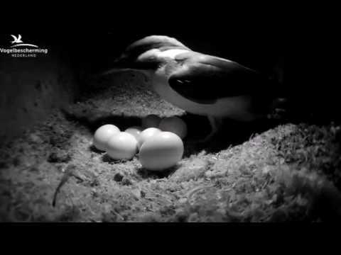 Let op het ei! - 9 juni 2017