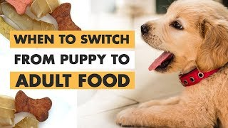 When to Switch From Puppy to Adult Food