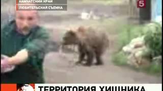 Камчатские медведи нападают на людей из-за лосося