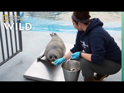 Weigh Day | Alaska Animal Rescue