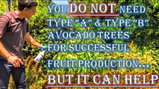 You DO NOT need Type A & Type B Avocado Trees For Successful Fruit Production!  BUT IT CAN HELP :-)