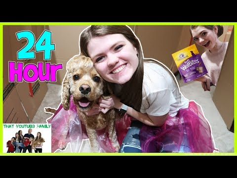 24 Hours In Box Fort Dog Mansion🐶🏠 / That YouTub3 Family