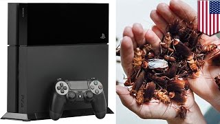 Cockroach in PS4: Cockroaches love to live it up inside Playstation 4 consoles - TomoNews