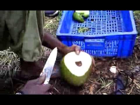 comment ouvrir une noix de coco ricardo