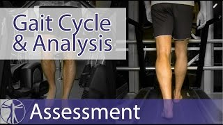 Gait Cycle & Gait Analysis