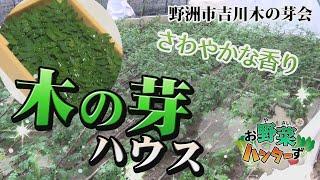 【お野菜ハンターず】木の芽ハウス 野洲市吉川木の芽会
