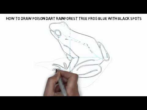 How To Draw Poison Dart Rainforest Tree Frog Blue With Black Spots Quickly And Easily