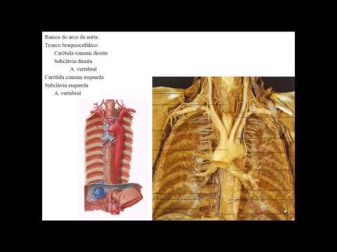 Che aiuta con osteocondrosi nel collo