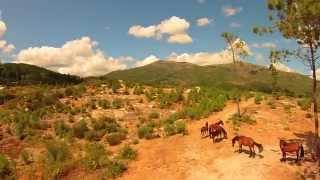 Chevaux sauvages Garano