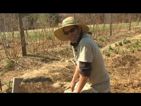 , title : 'Planting Spring Gardens: Transplanting Garlic