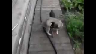 Смотреть онлайн Пес и кот – дружба навеки