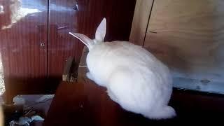 У кролика опухли глаза: причины и способы лечения