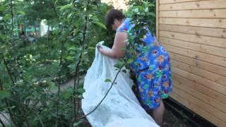 Огурцы. Посадка огурцов.Часть 2. Новый способ. Высокая урожайность.