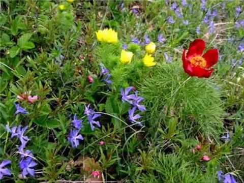 Я дышал ароматом цветов полевых