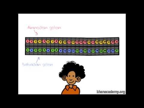 Genetik 101: Genlerimiz Nereden Geliyor? (3. Bölüm) (Biyoloji)