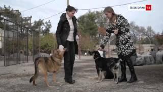 Евпаторийский фонд помощи бездомным животным: репортаж из приюта