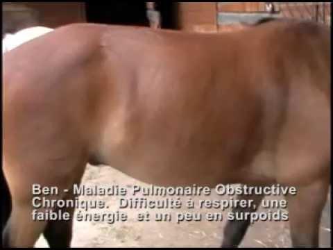 L'effet d'Equine Breathing sur un cas de maladie pulmonaire obstructive chronique.