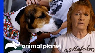 Tia Finds The Perfect Therapy Dog For A Little Girl | Pit Bulls & Parolees by Animal Planet