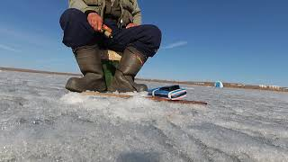 Ловля окуня на кастмастер зимой