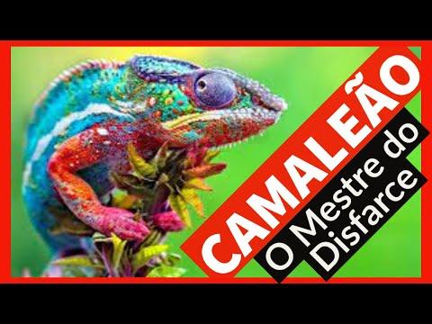 CAMALEO - Fatos e curiosidade do animal que  o mestre do disfarce.