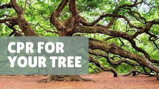 How to save a dying tree   Catherine Arensberg with Chris Francis