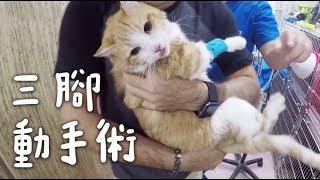 【黃阿瑪的後宮生活】三腳動手術!