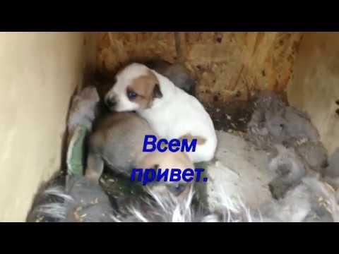 Подопечные собачки в Романково.