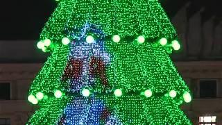 Харьковская елка – официально самая высокая в Украине