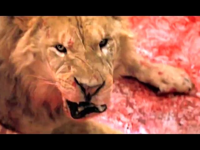 Roar Trailer The Most Dangerous Film Ever Made 2015 Wild