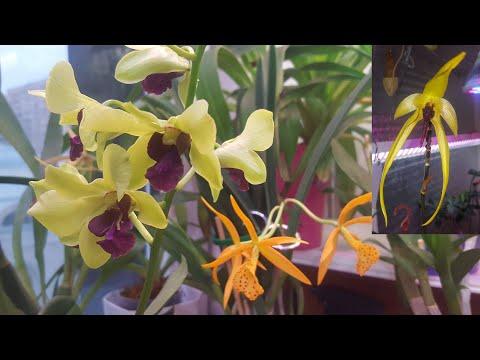 А что же в царстве орхидейном..