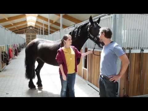 Pferde Grundpflege - Die besten Tipps und Mittel