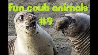 FUN coub animals #9 / видеоприколы / coub 2018 / животные / смешные животные / приколы 2018