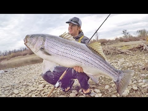 How To Catch Giant Fish From Shore