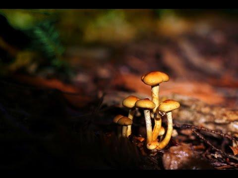 Trattamento di un fungo di unghie indipendentemente