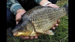 Отчеты о рыбалке в подмосковье полубарское