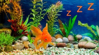 🐠 Baby Lullaby and Freshwater Aquarium ❤️ Bedtime Lullabies