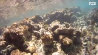 preview picture of video 'Episode 24 : de Antigua à Saint-Martin'