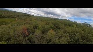 [FPV] Forest fly