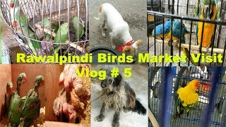 Birds Bazaar Wah Cantt Reasonable Price all parrots urdu