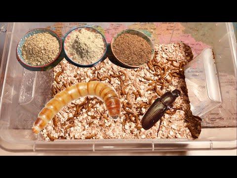 Dass man machen muss dass die Würmer nicht sind
