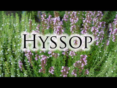 Video Herbs, Roots & Resins - Hyssop