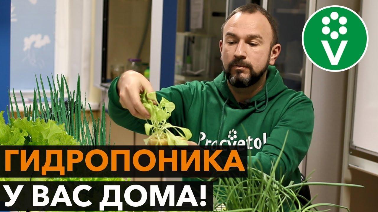 Свежая зелень БЕЗ НИТРАТОВ круглый год!