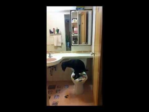 מי אמר שכלב בבית זה לכלוך?