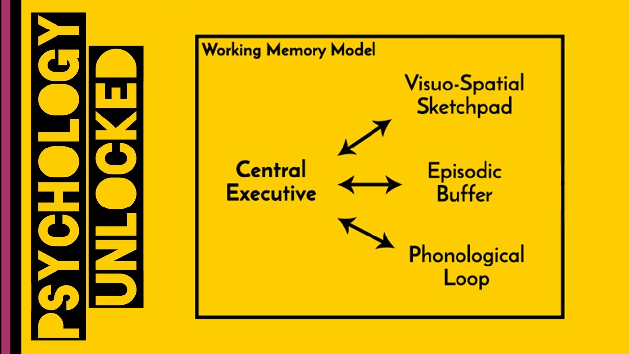 Working Memory (Baddeley & Hitch, 1974)