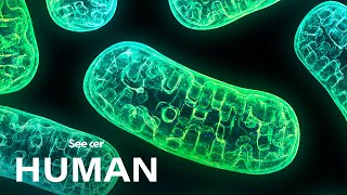 Mitochondria Aren't Just the Powerhouse of the Cell
