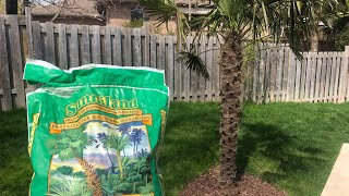 How to fertilize your palm trees