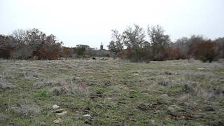 TYHP hunt at Smith Ranch near San Saba on 11/12/2011 (1 of 3)