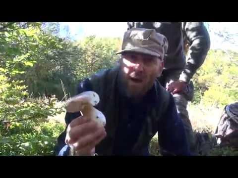 Il milkwoman e i funghi schiumosi che trattare