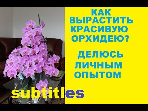 , title : 'Как вырастить  орхидею ФАЛЕНОПСИС